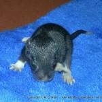 Rattenbabys Samy0006
